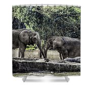 African Elephants_hdr Shower Curtain