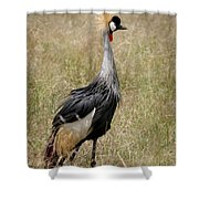 African Grey Crowned Crane Shower Curtain