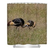 African Grey Crowned  Crane With Chick Shower Curtain