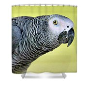 African Grey Shower Curtain