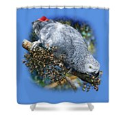 African Grey Parrot A1 Shower Curtain