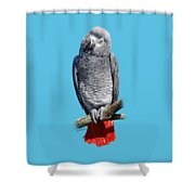 African Grey Parrot C Shower Curtain