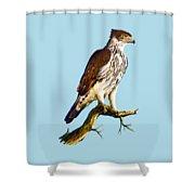African Hawk Eagle Shower Curtain
