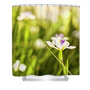 African Iris Bokeh Shower Curtain