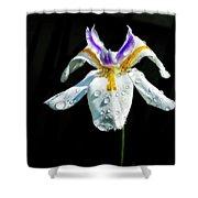 African Iris Raindrops Shower Curtain
