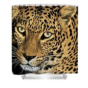 African Leopard Panthera Pardus Captive Wildlife Rescue Shower Curtain
