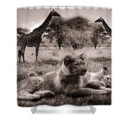 African Life Shower Curtain
