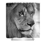 African Lion #8 Black And White Shower Curtain