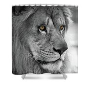African Lion #8 Black And White  T O C Shower Curtain