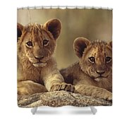 African Lion Cubs Resting On A Rock Shower Curtain