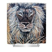 African Lion Shower Curtain by Nick Gustafson