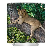 African Lion Panthera Leo On Tree, Lake Shower Curtain