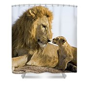 African Lion Panthera Leo Seven Shower Curtain