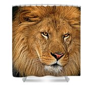 African Lion Panthera Leo Wildlife Rescue Shower Curtain