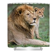 African Lion Panthera Leo With Its Cub Shower Curtain