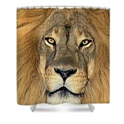 African Lion Portrait Wildlife Rescue Shower Curtain