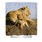 African Lion With Mother's Tail Shower Curtain by Suzi Eszterhas