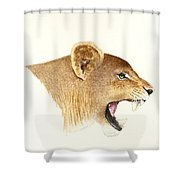 African Lioness Shower Curtain