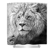 African Nobility - Lion Shower Curtain