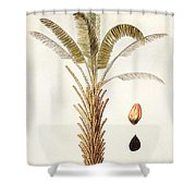 African Oil Palm Shower Curtain