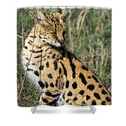 African Serval In Ngorongoro Conservation Area Shower Curtain