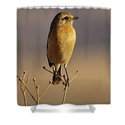 African Stone Chat Female Shower Curtain