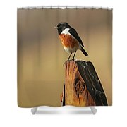African Stone Chat Shower Curtain