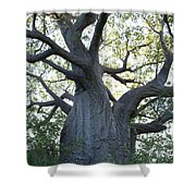 African Tree Shower Curtain