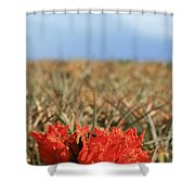 African Tulip Blossom Over Pineapple Field Aloha Makawao Shower Curtain
