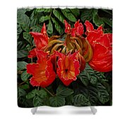 African Tulip Shower Curtain
