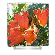 African Tulips Shower Curtain