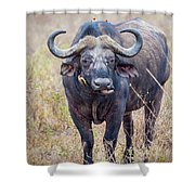 African Water Buffalo And Friends Shower Curtain