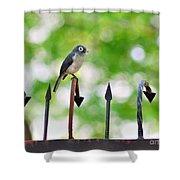 African White-eye Bird Shower Curtain