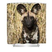 African Wild Dog Okavango Delta Botswana Shower Curtain