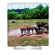 African Zebras Feeding Shower Curtain