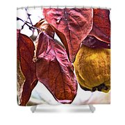 After Rain - Fall In Mendocino Orchard Shower Curtain