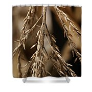 After The Harvest - 1 Shower Curtain