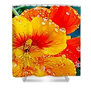 After The Rain Color Shower Curtain