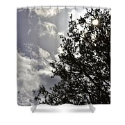 After The Rain V Shower Curtain