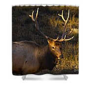 After The Rut Shower Curtain by Barbara Schultheis