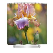 Afternoon Delight. The Beauty Of Irises Shower Curtain