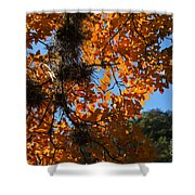 Afternoon Light On Maple Leaves Shower Curtain