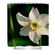 Afternoon Of Narcissus Poeticus. Shower Curtain