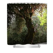 Afternoon Rain Shower Curtain