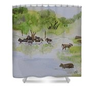 Afternoon Swim Shower Curtain