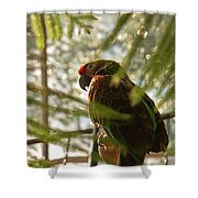 Afteroon Snooze Shower Curtain