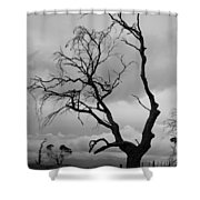 Against Sky Shower Curtain