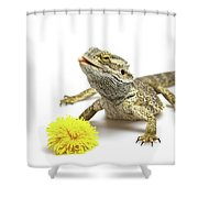Agama And Dandelion  Shower Curtain