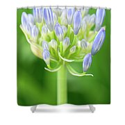 Agapanthus Africanus Flower Shower Curtain