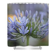 Agapanthus Africanus - Lily Of The Nile 2 Shower Curtain
